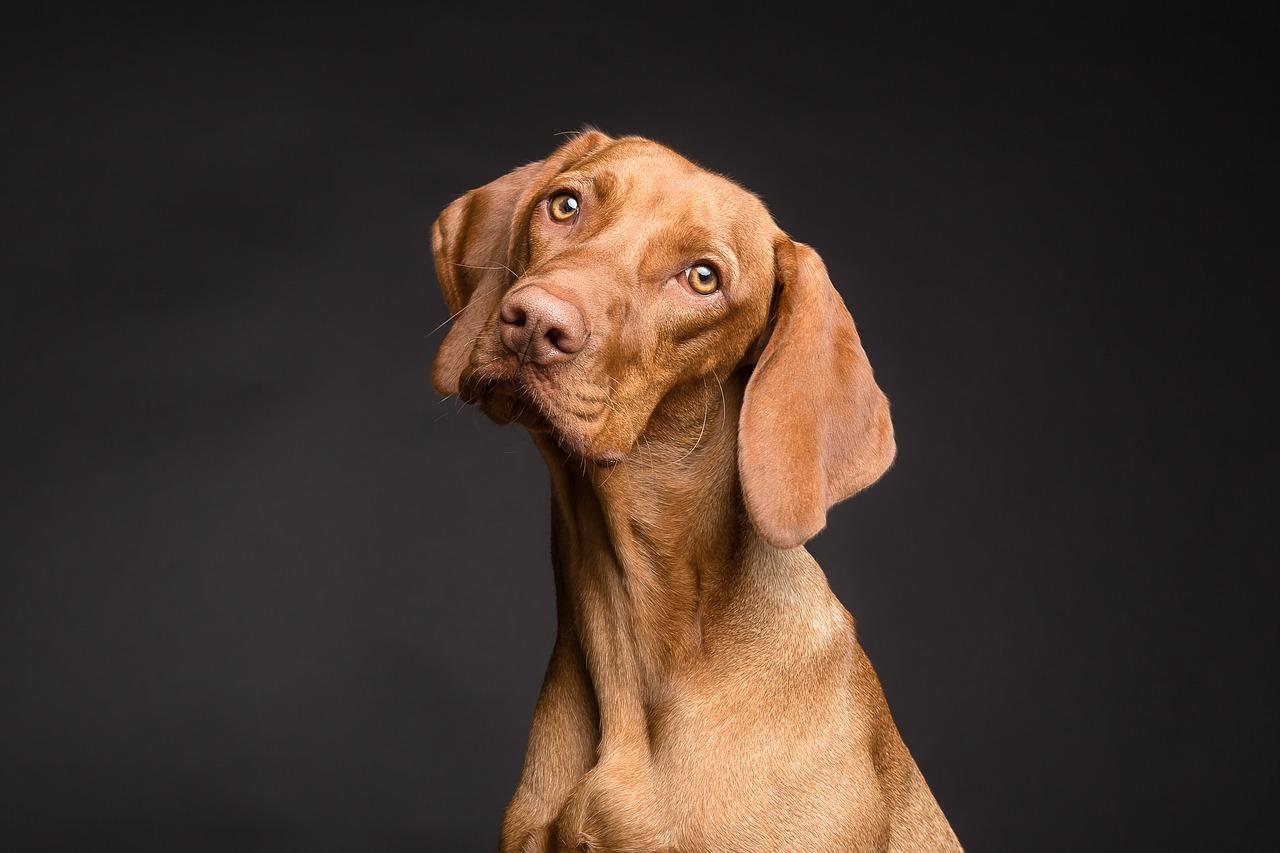 Einfacher Rat zur Pflege Ihres Hundes